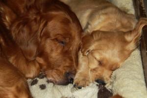 Nog even een lekker dutje samen met mama, voordat ze wordt opgehaald!