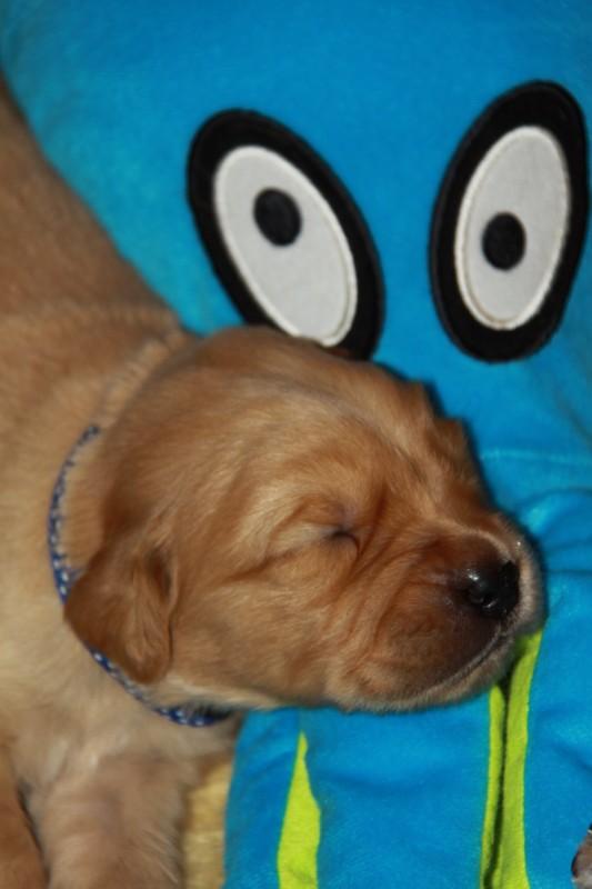 Biko vind hem ook lekker liggen !