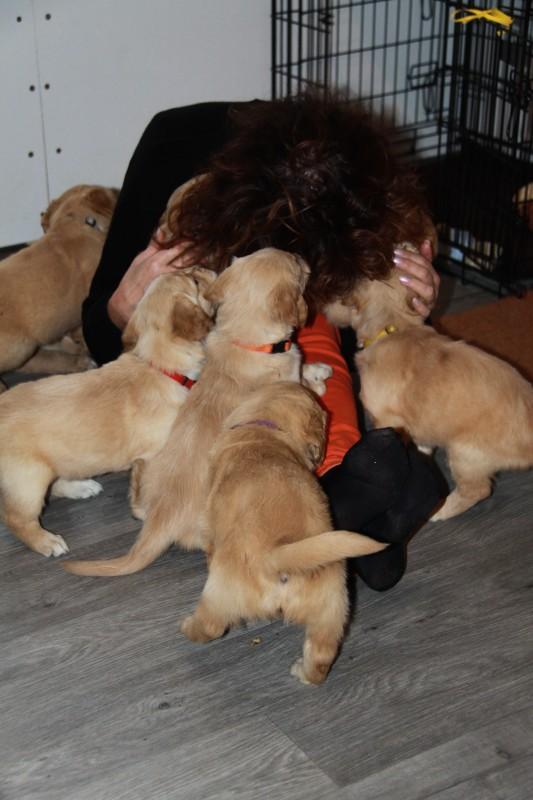 Enneke geniet ook volop, de puppies ook !!