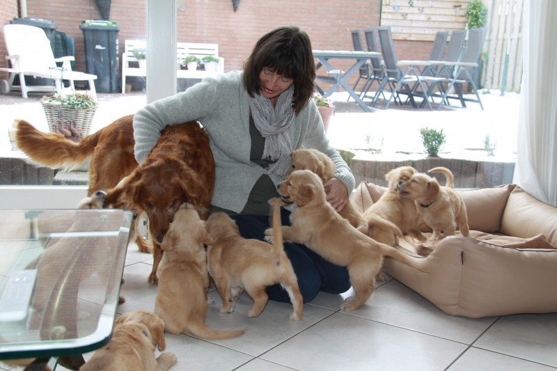 Puppie- invasie !!
