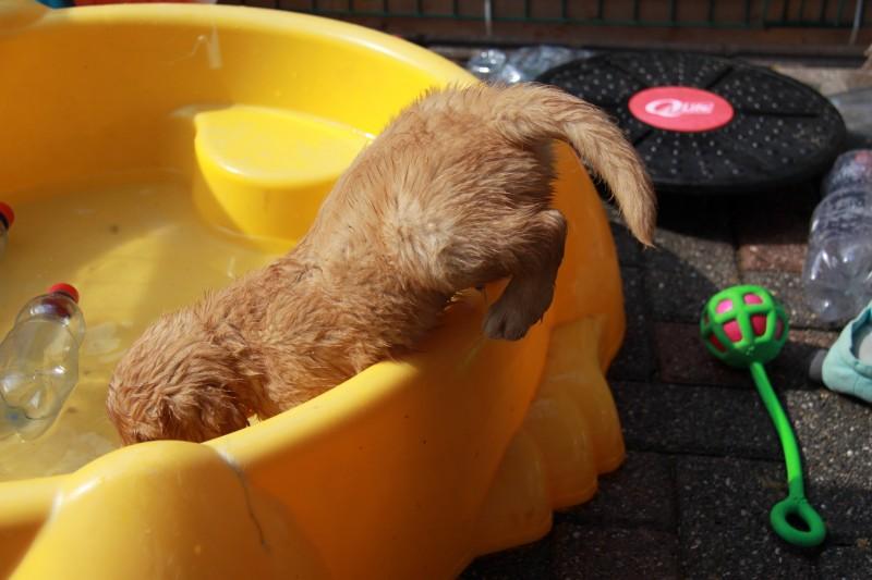Een duik !!