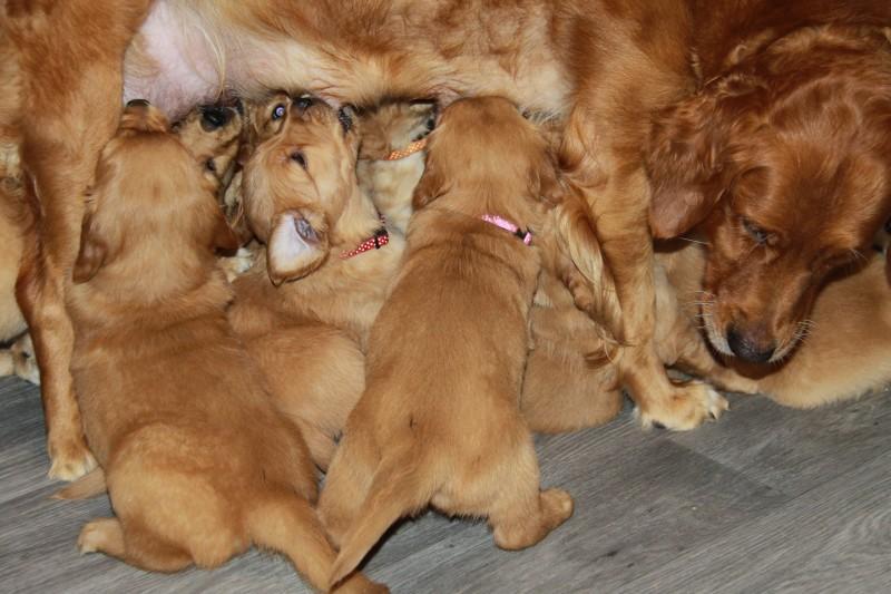 Trosje pups ( met tanden) onder je buik !